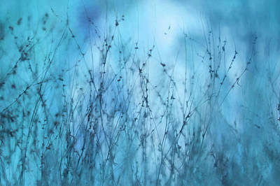 Weed Mixed Media - Blue Weeds Abstract 2 by Lori Deiter