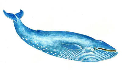 Whale Painting - Blue Whale by Michael Vigliotti