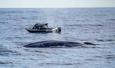 Photograph - Blue Whale North River by Randy Straka