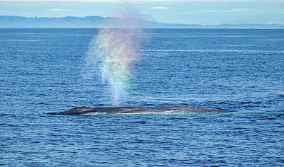 Photograph - Blue Whale Rainbow Blow, Monterey Bay by Randy Straka