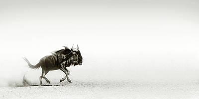 Animals Photos - Blue wildebeest in desert by Johan Swanepoel