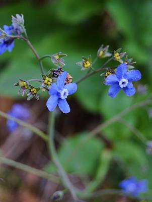 Photograph - Blue Wildflowers by Warren Thompson