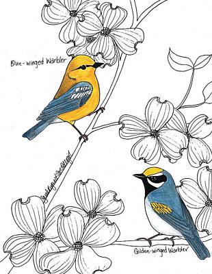 Warbler Mixed Media - Blue-winged And Golden-winged Warbler by Sarah Rupert