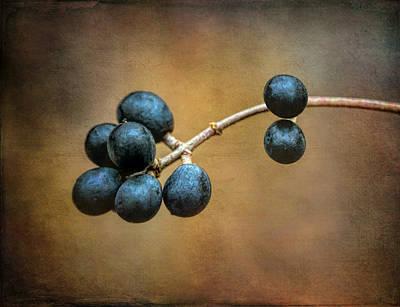 Wall Art - Photograph - Blue Winter Berries by Martin Belan
