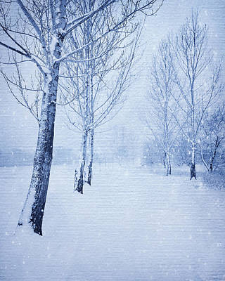 Photograph - Blue Winter Path by Theresa Tahara