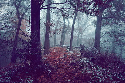 Photograph - Blue Woods.  Enchanted by Jenny Rainbow
