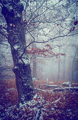 Photograph - Blue Woods. Mysterious  by Jenny Rainbow