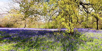 Photograph - Bluebell Carpet by Gary Eason