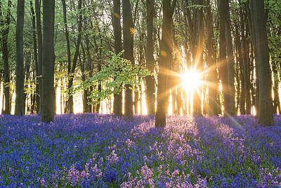 Photograph - Bluebell Dawn by Chris Deeney