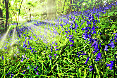 Photograph - Bluebell Dawn by Meirion Matthias