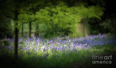 Bluebell Forest Art Print by Amanda Elwell
