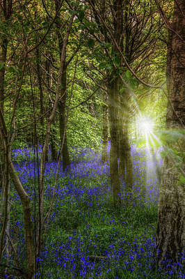 Sun Rays Mixed Media - Bluebell Forest by Mark Hunter