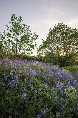 Photograph - Bluebell Hill by Spikey Mouse Photography