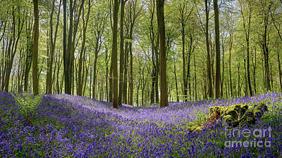 Contre-jour Photograph - Bluebell Hollow by Richard Thomas