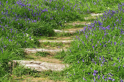 Photograph - Bluebell Path by Shirley Mitchell