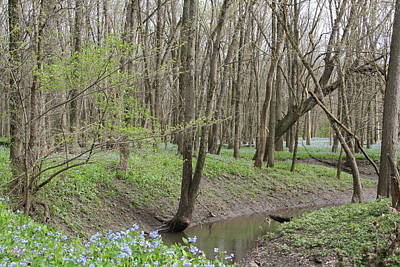 Photograph - Bluebell Spring Creek by Dylan Punke