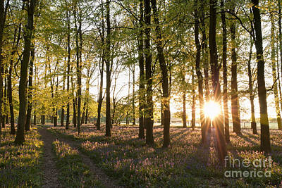 Photograph - Bluebell Sunset by Michael  Winters