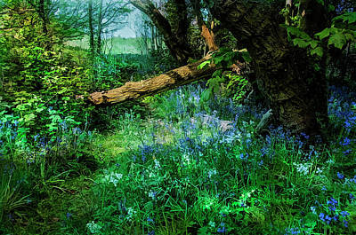 Photograph - Bluebell Time by Brian Tarr