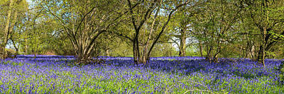 Photograph - Bluebell Wood by Gary Eason