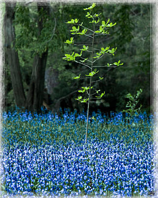 Photograph - Bluebell Woods by Chris Lord