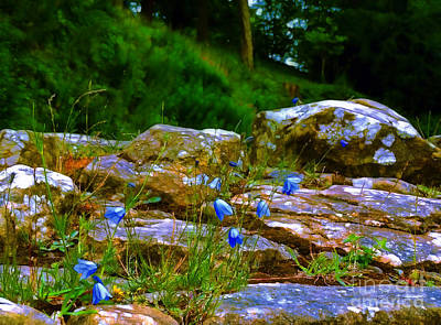 Photograph - Rocks And Bluebells At Fountains Abbey by Judi Bagwell