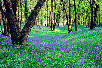 Woodland Flowers Photograph - Bluebells At Doon Hill by John McKinlay