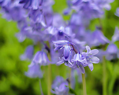 Photograph - Bluebells by Chris Coffee