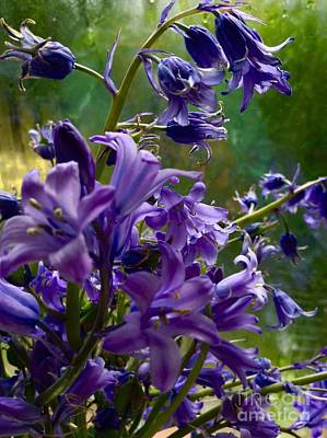 Photograph - Bluebells In My Garden Window 2 by Joan-Violet Stretch