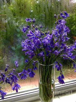 Photograph - Bluebells In My Garden Window 5 by Joan-Violet Stretch