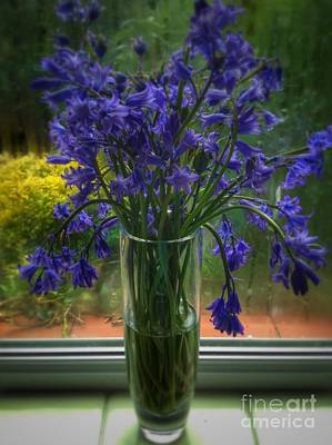 Photograph - Bluebells In My Garden Window 7 by Joan-Violet Stretch