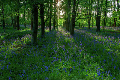 Photograph - Bluebells In Oxey Woods by Nick Atkin
