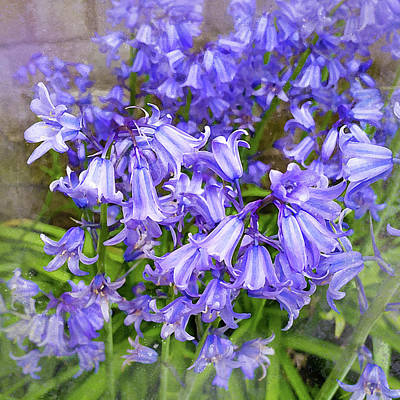 Photograph - Bluebells by Judi Saunders