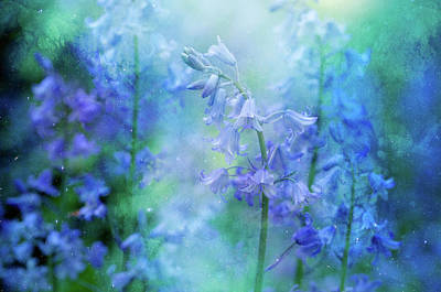 Manipulation Photograph - Bluebells by Margaret Goodwin