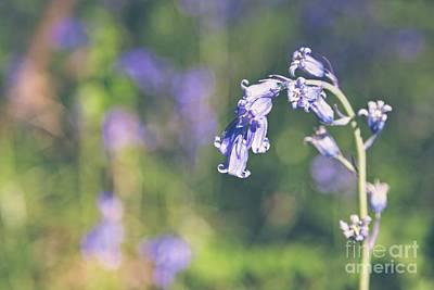 Bluebells - Natalie Kinnear Photography Art Print