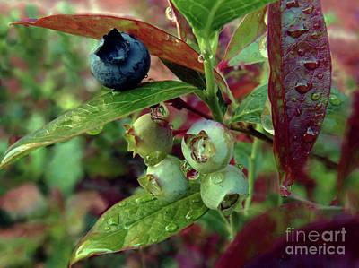 Photograph - Blueberries by Kim Tran