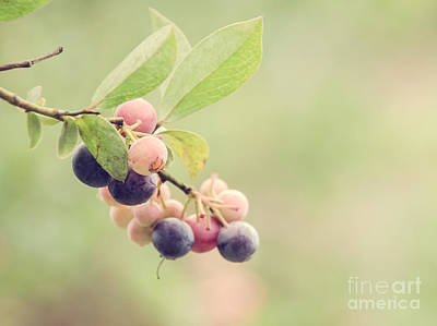 Photograph - Blueberries by Andrea Anderegg