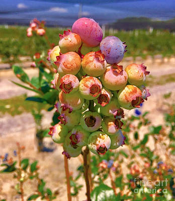 Photograph - Blueberries by Carey Chen