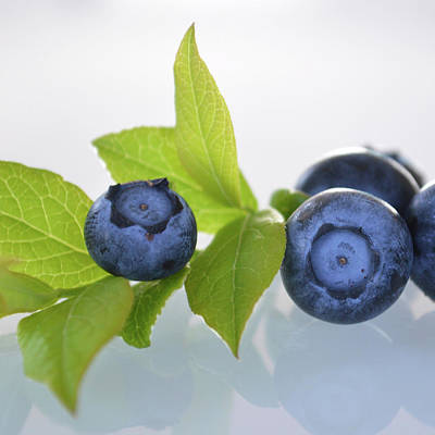 Photograph - Blueberries In Light by Nadine Primeau
