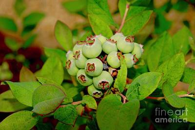 Wall Art - Photograph - Blueberries by Megan Cohen