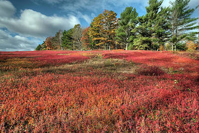 Digital Art - Blueberry Autumn by Patrick Groleau