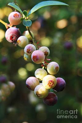 Photograph - Blueberry Bubbles by Kim Henderson