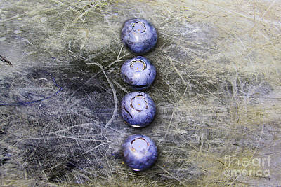 Photograph - Blueberry Buttons by Nina Silver