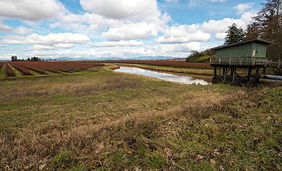 Photograph - Blueberry Field And Pump House by Tom Cochran