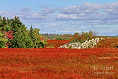 Photograph - Blueberry Field by Debbie Stahre