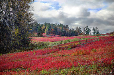 Photograph - Blueberry Field by John Meader
