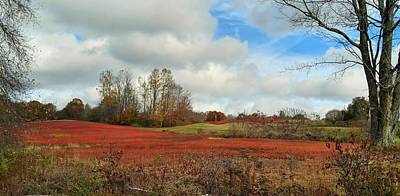 Photograph - Blueberry Fields by Jewels Blake Hamrick
