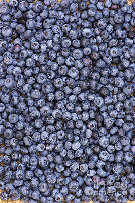 Blueberry Harvest Art Print by Tim Gainey