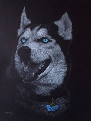 Blueberry Drawing - Blueberry Husky by Bernardo Castaneda