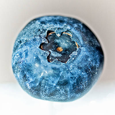 Photograph - Blueberry Macro by Jim DeLillo