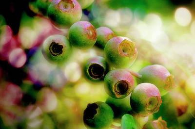 Photograph - Blueberry On The Vine by Mike Eingle